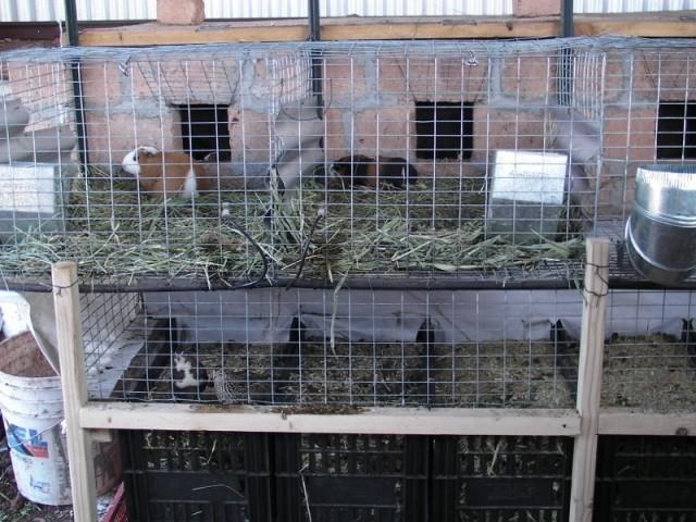 quailAndWorms
