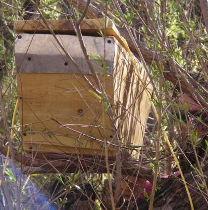 Bait Hive