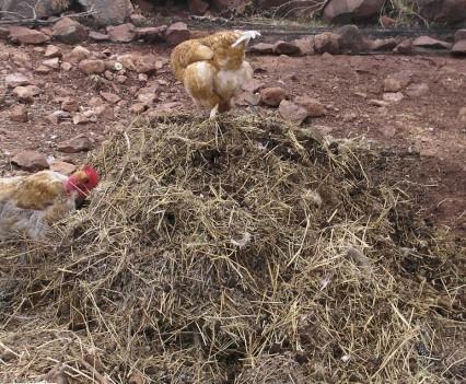 composting-2d