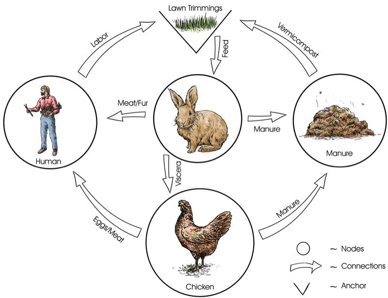 Example Of Food Web With  Organisms