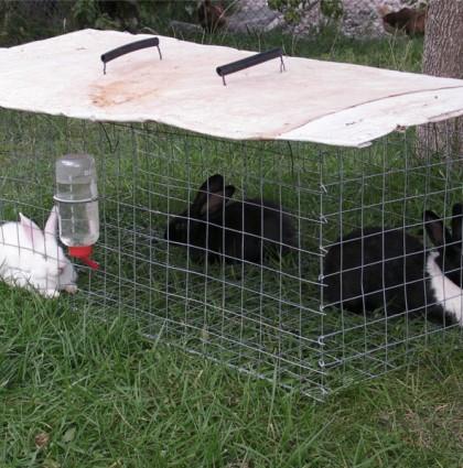 Rabbit Mower