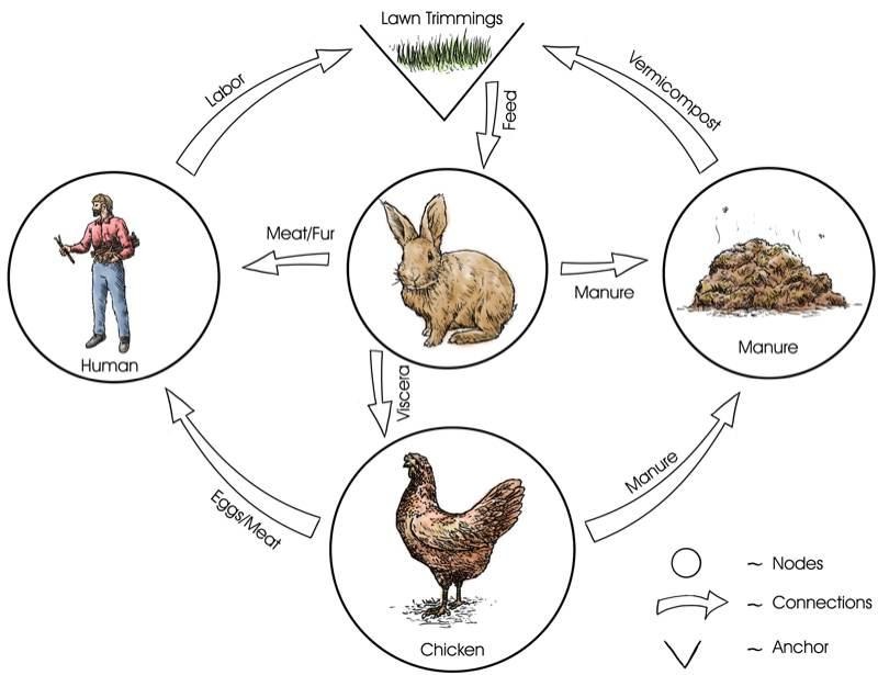 Homesteading Food Web. Raising chickens sustainably