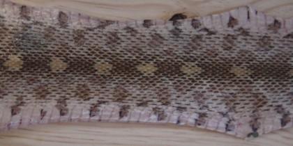 Tanning Snakeskin